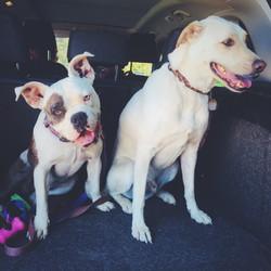 Lilah and Tango
