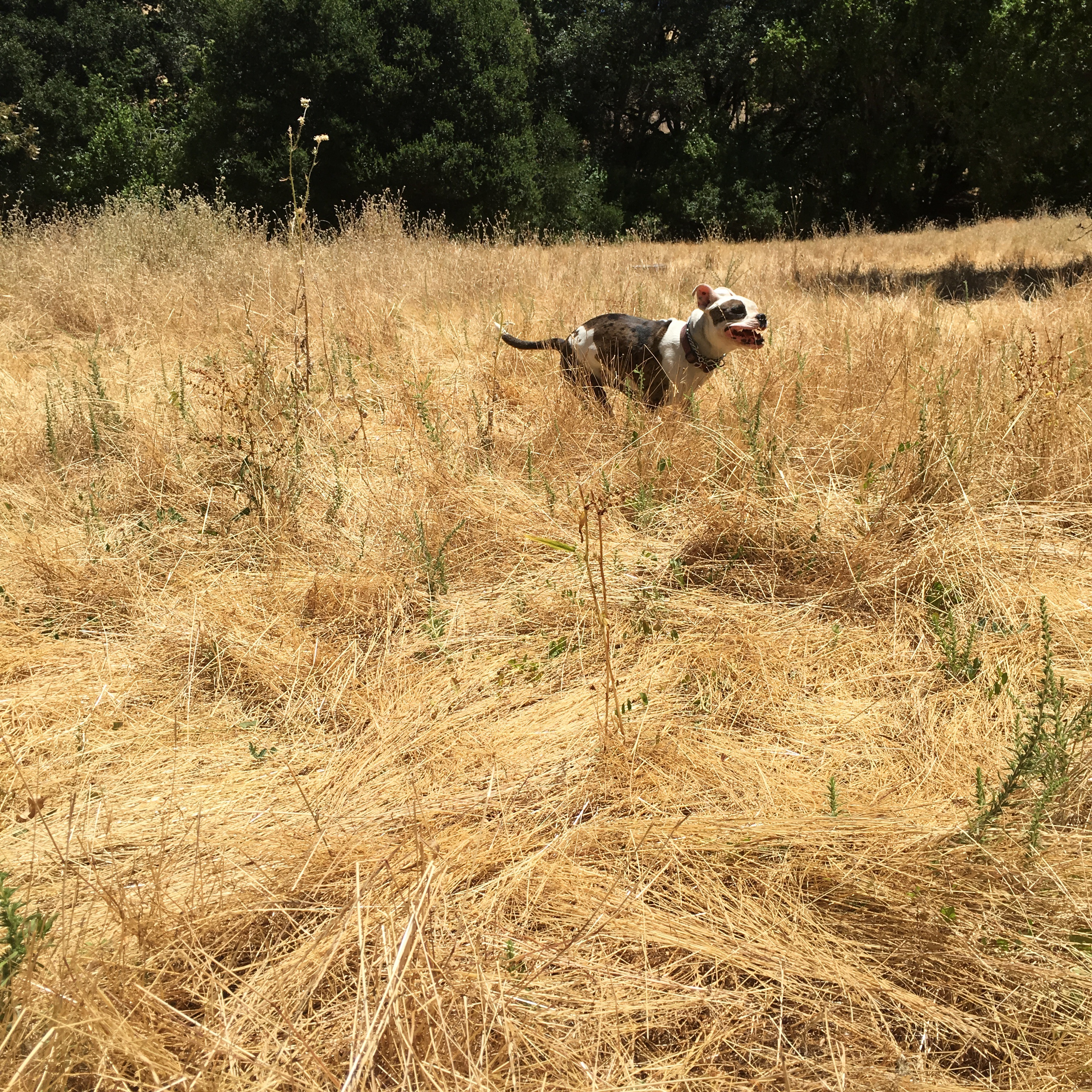 Lilah in the Golden Fields