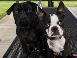 Little Dog Training Tampa