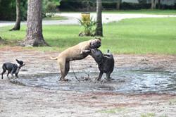 E Collar Dog Training Tampa Bay