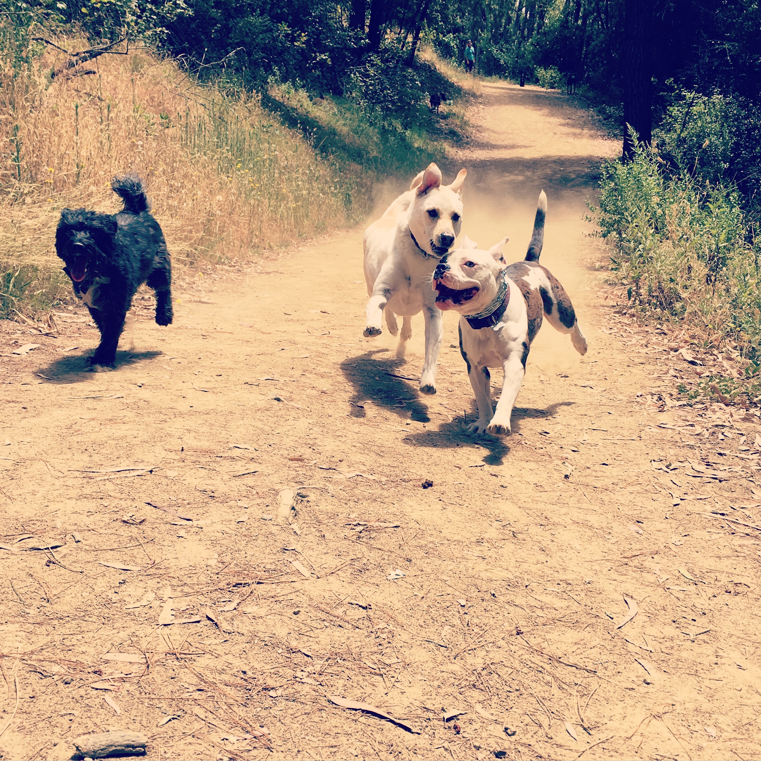 Daxter, Tango and Lilah Hiking