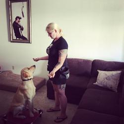 Teaching focus Dog Training Tampa