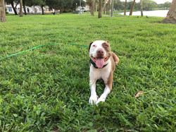 Aggressive Dog Training Tampa