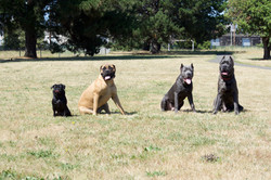 Dog Training for All Sizes-Tampa Bay