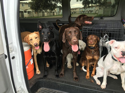 Dog Party in the Van- Tampa Bay