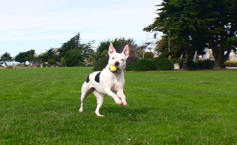 Dog jumping with ball