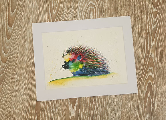 Colourful Hedgehog Picture