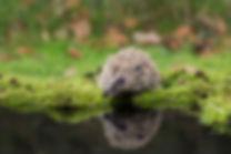 pond-ptes.jpg