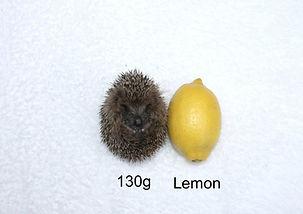 Size-lemon-132g.JPG