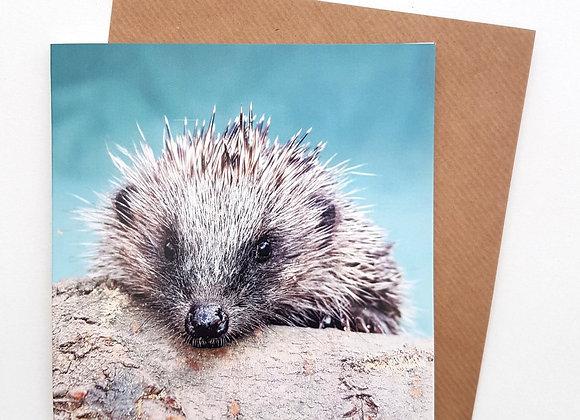 Greetings Card (Dawny)