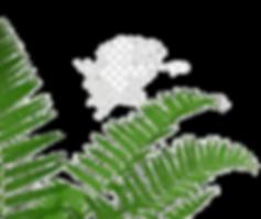 fern-tea-tree-http-cookie-plant-stem-tea