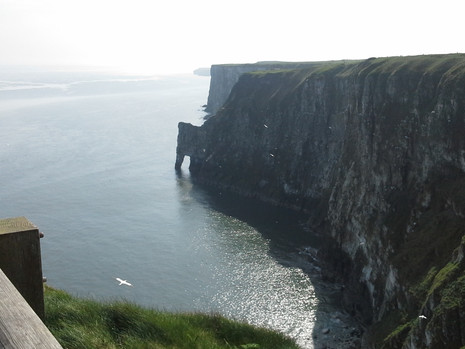 Bempton Cliffs, Yorkshire