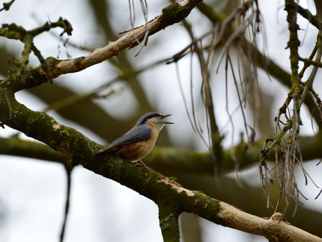 Normanton Hall Bird Walk