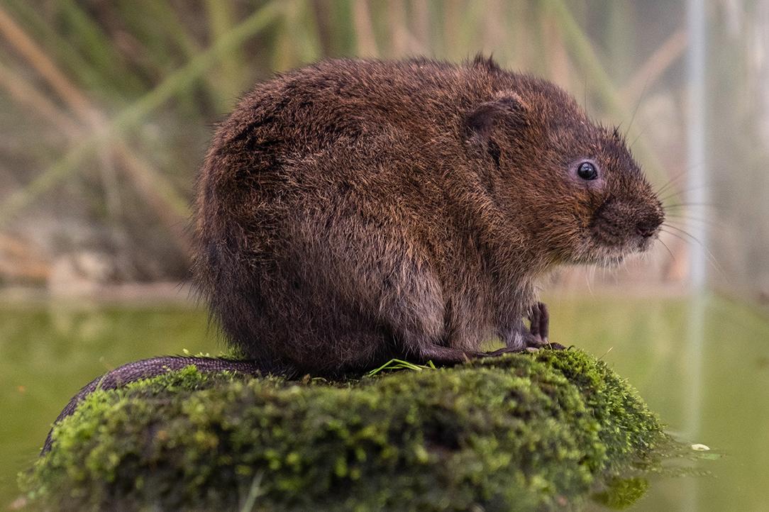Ratty's rock