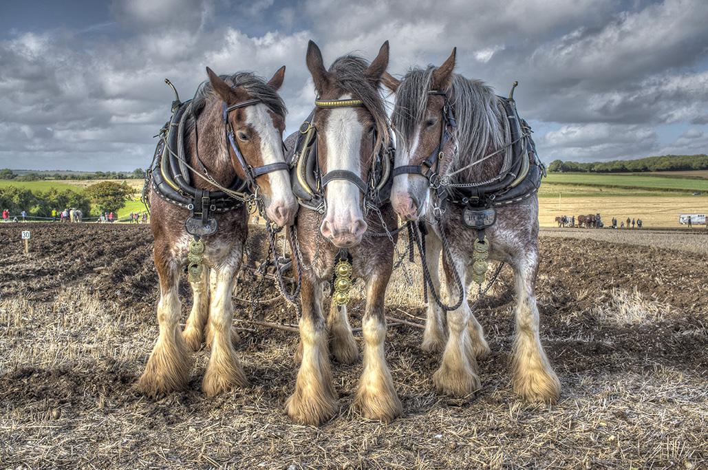Ploughing through