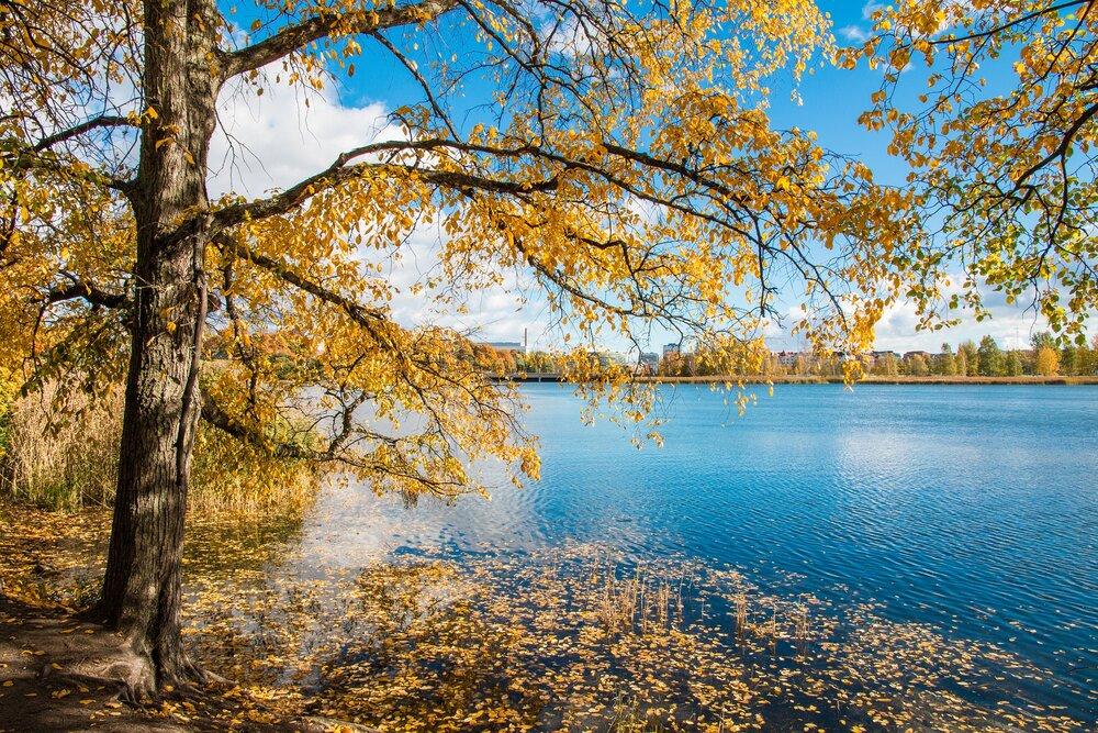 tree-1987390_1920.jpg