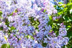 flowers-3435488_1920.jpg