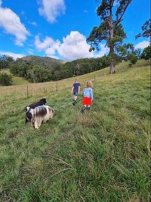 On the Farm Walking the Goats Obi Obi Homestead.jpg