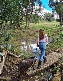 On the Farm Walking Goats Obi Obi Homestead.jpg