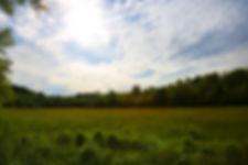 Lush grazing pasture