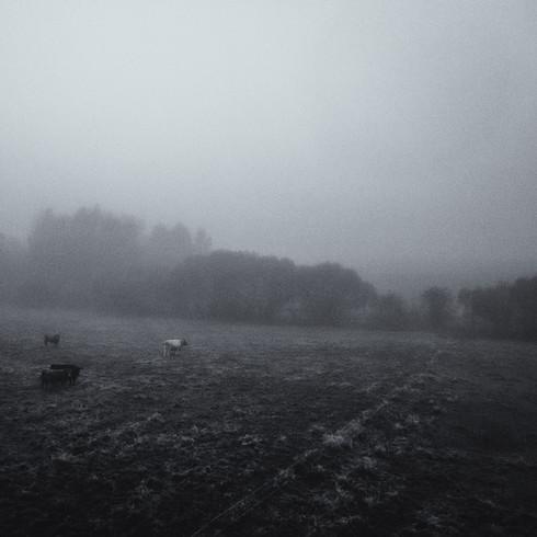landscape_002.jpg