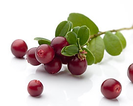 Brusnice sestavina soka iz jagodičevja Synergy Mistify