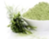 Ječmenova trava - sestavina v tekočem klorofilu Synergy PhytoLife
