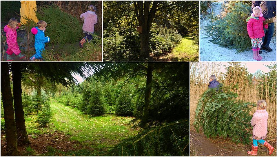 treecollageb.jpg