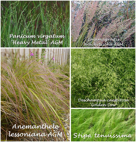 15 Grasses for WILDLIFE in 10.5cm pots