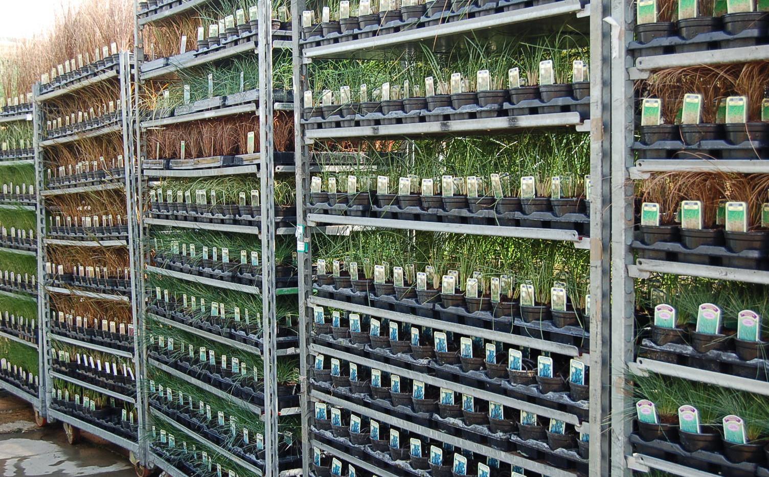 Wholesale Grasses on Trolleys