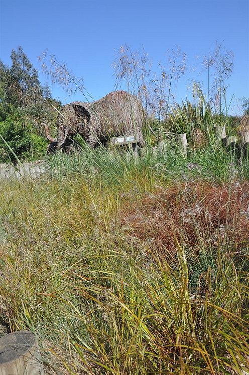 15 Sun Loving Grasses in 10.5cm pots