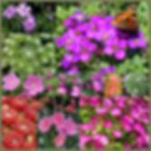 collage2 (2).jpg