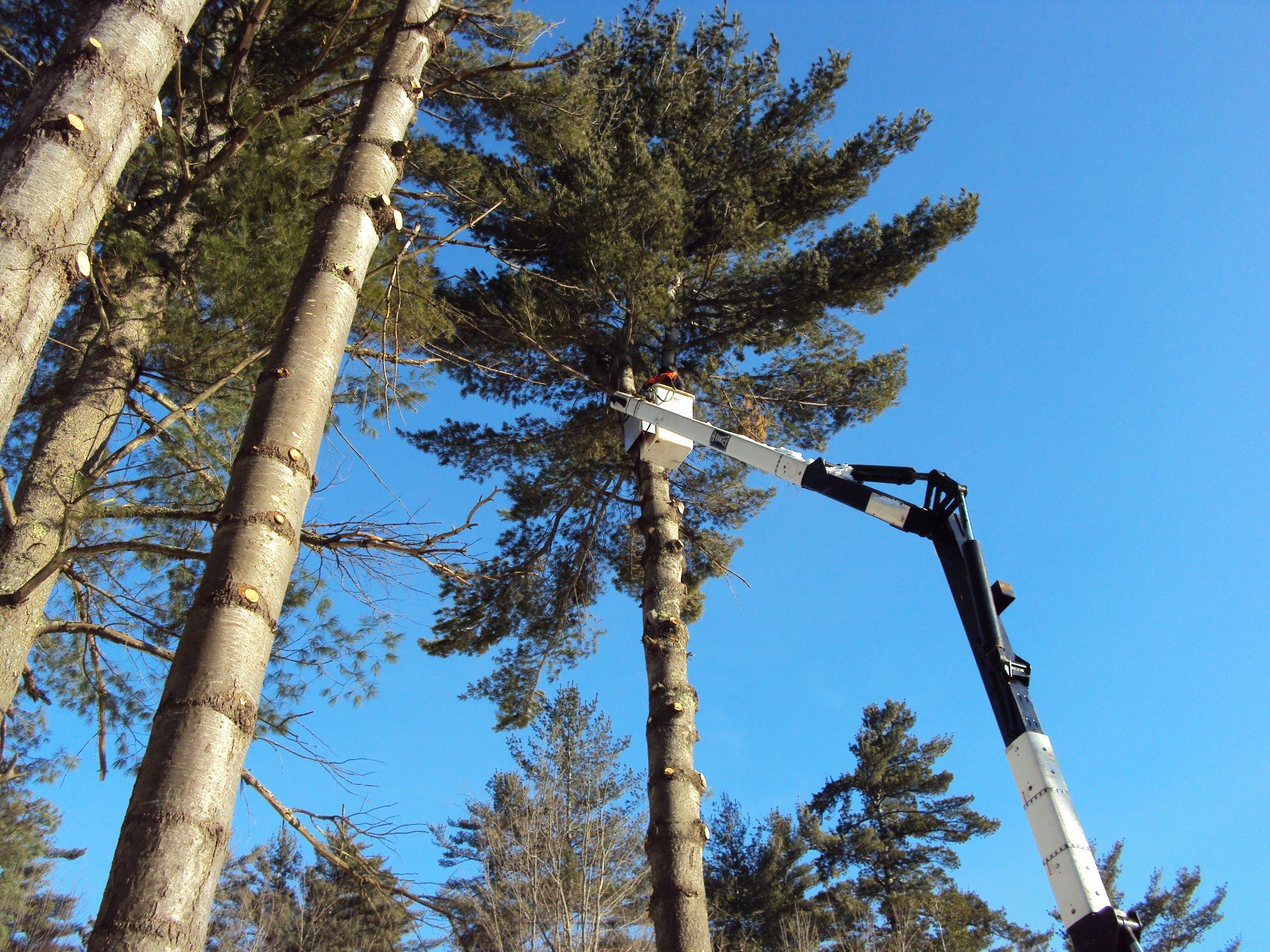 Bucket Truck Tree Service