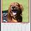 Thumbnail: 2022 Indie Calendar