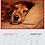 Thumbnail: 2021 Indie Rescue Calendar!