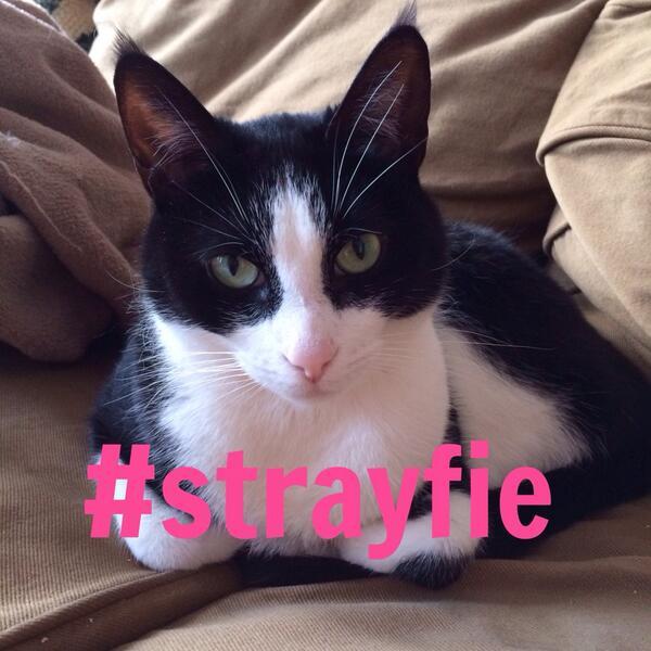 Strayfie 2.jpg