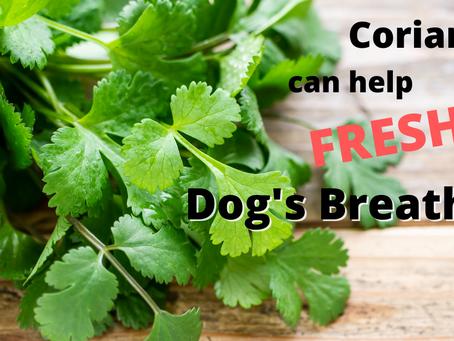 如何改善狗狗口嗅問題?