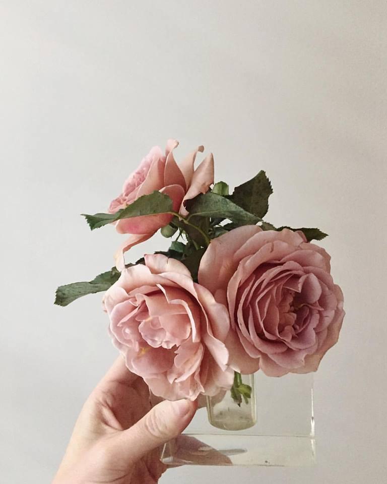 Koko Loko Garden Roses