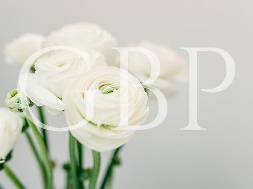 Stock Photo - Ranunculus White flowers close up