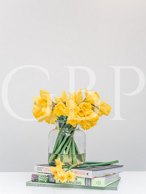 Stock Photo - Daffodils Easter