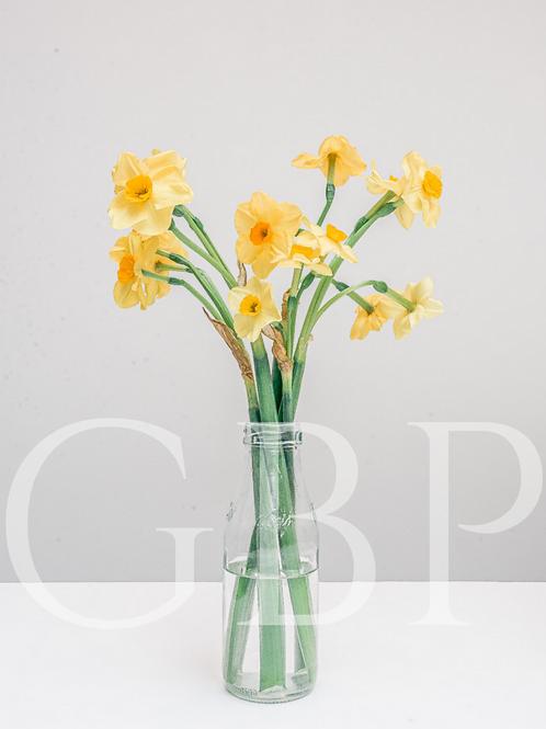 Stock Photo - Narcissi in Milk Bottle