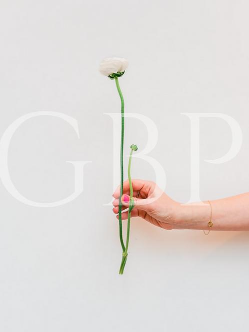 Stock Photo - Single white flower