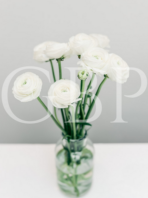 Stock Photo - Ranunculus White flowers in vase