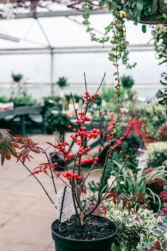 Brittons Plant Nurseries (14 of 46)_webs