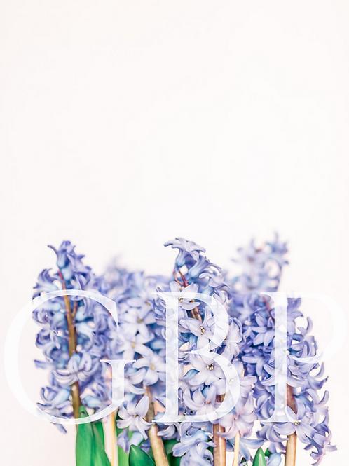 Stock Photo - Hyacinth Tops