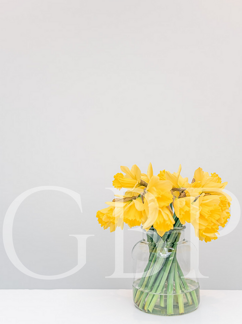 Stock Photo - Daffodils and space