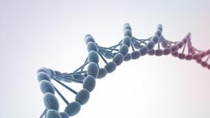 遺伝子による選別が行われ始める