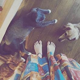 3匹と私❤︎_#猫_#dog_#cat_#morning _#ミニチュアダックス