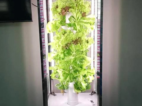 Is Vertical Farming Technology the Key to Smart Farming?