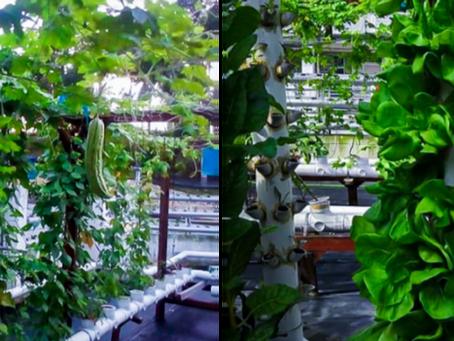 A Better Life through Urban Farming